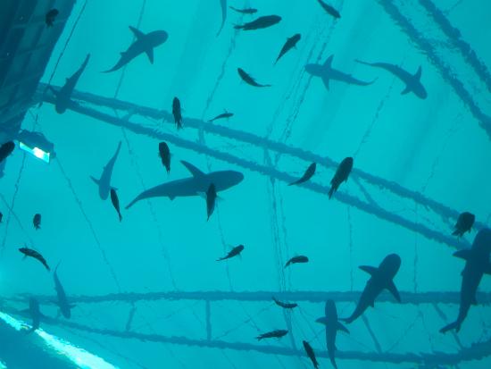 Sharks 2